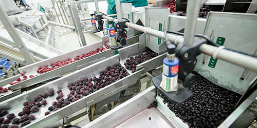 CANNING INDUSTRY